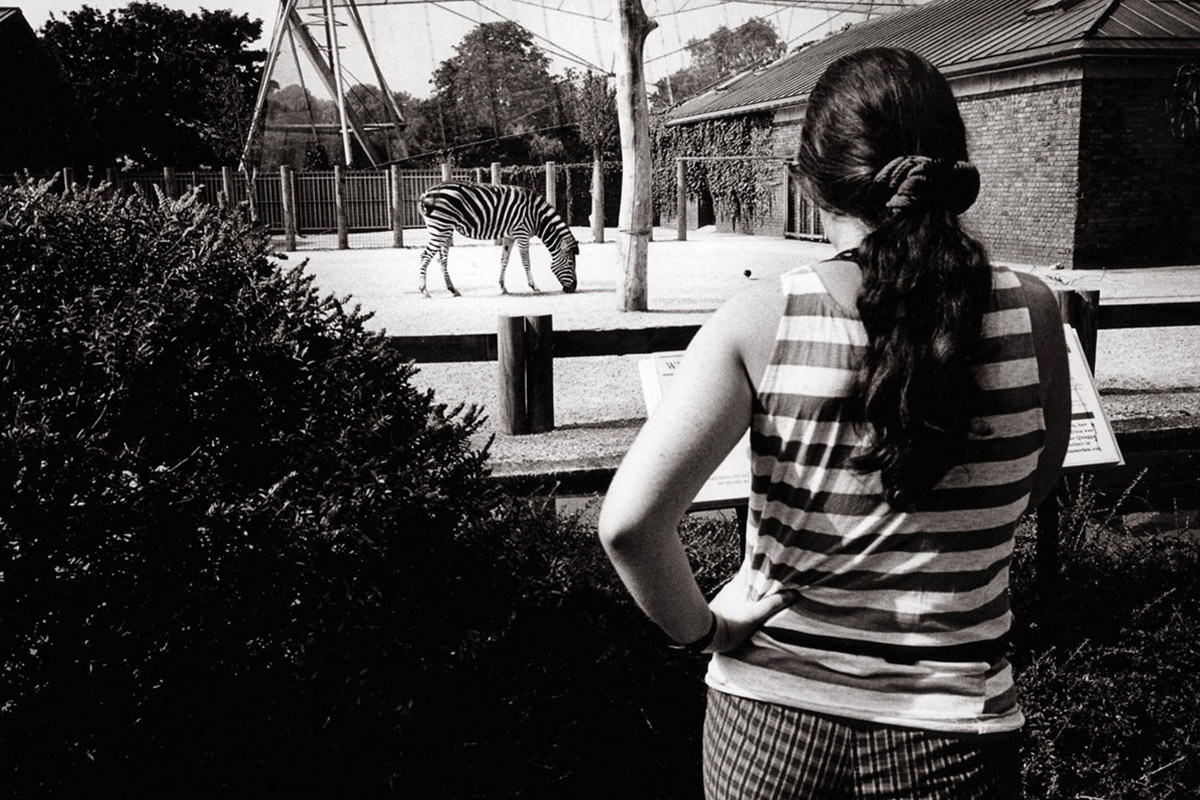 Tim Fox - London Zoo- Street Photograph- black and white - zebra and woman with striped top